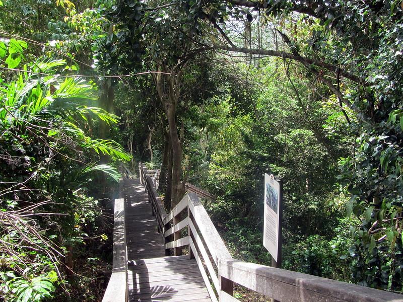 Barbados Harrison's Cave pathway
