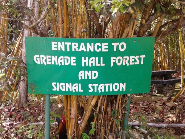 Barbados Grenade Hall Forest