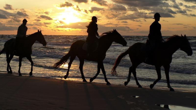 Barbados horseback riding