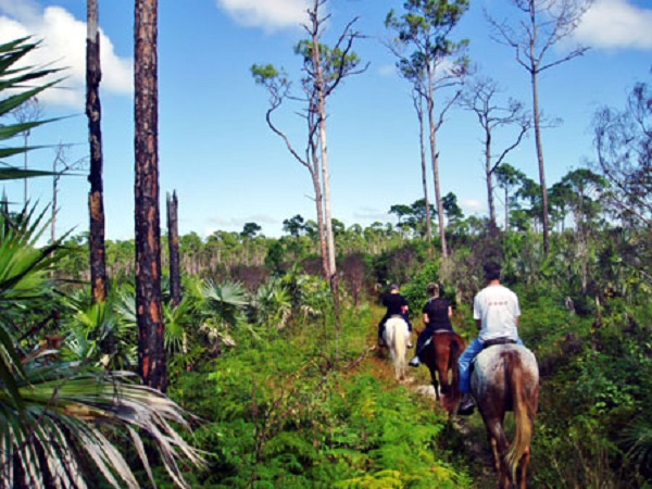 Barbados Horse Back Riding