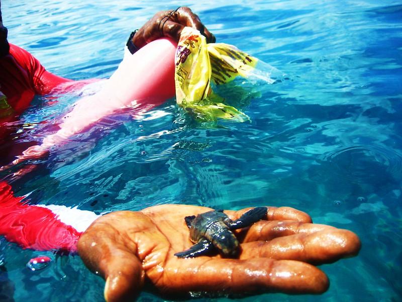 Barbados sea turtle types