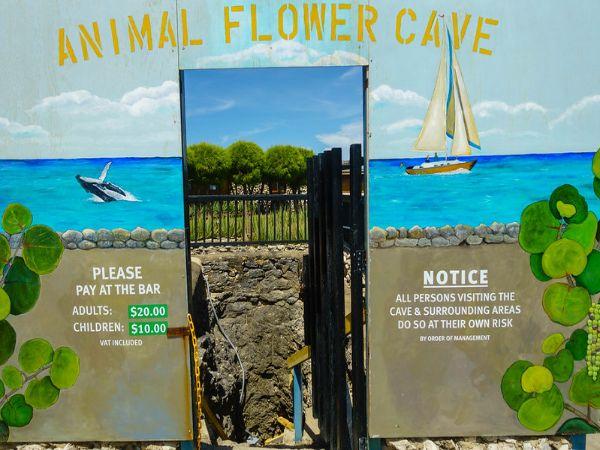 Barbados Animal Flower Cave Attraction