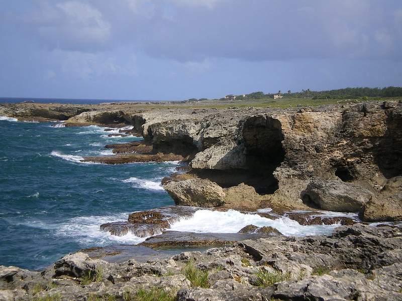 barbados animal flower cave