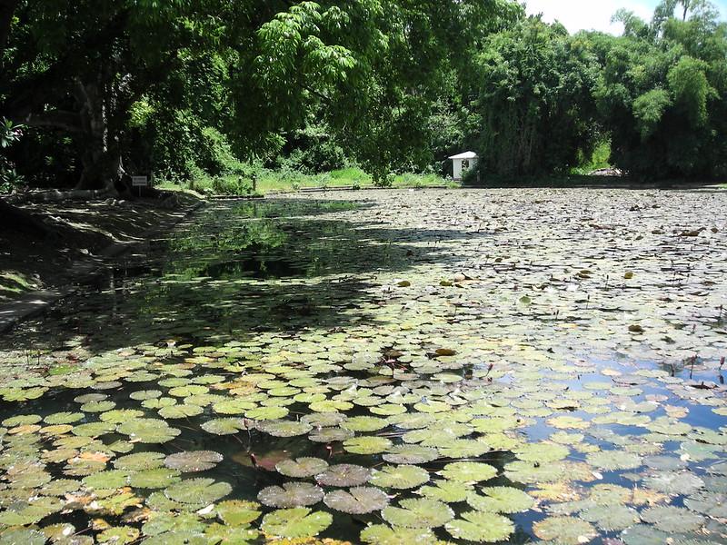 Barbados Codrington College fish pond