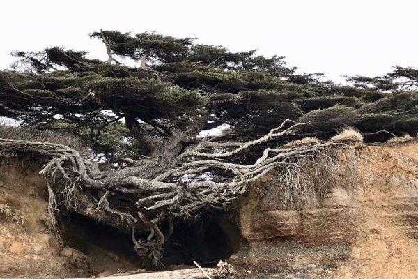 10 Extraordinary Trees From Around The World